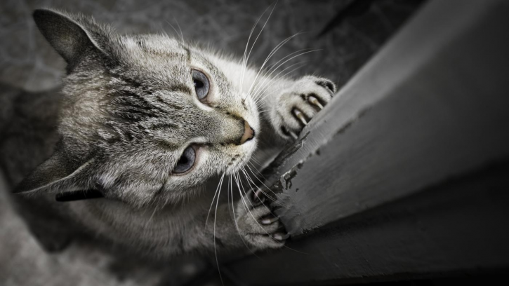 How to Protect Your Furniture from the Cat's Claws