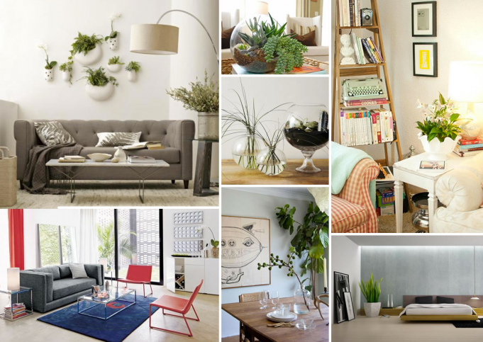 The Role of Plants in the Interior Design